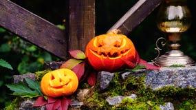 Abóboras de Dia das Bruxas na pedra com musgo em uma floresta assustador Imagem de Stock