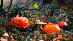 Abóboras de Dia das Bruxas no parque Fotos de Stock Royalty Free