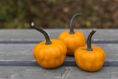 Abóboras de outono na madeira cinzenta no parque Imagens de Stock Royalty Free
