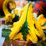 Abóboras decorativas Fotografia de Stock