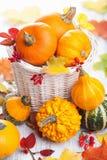 Abóboras decorativas do Dia das Bruxas do outono na cesta Imagem de Stock