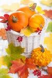 Abóboras decorativas do Dia das Bruxas do outono na cesta Imagens de Stock Royalty Free