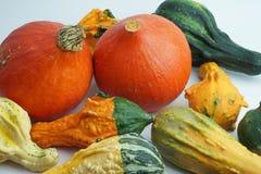 Abóboras decorativas do outono em um fundo branco Foto de Stock