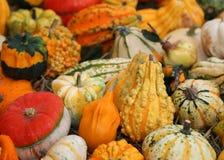 Abóboras decorativas para o Dia das Bruxas para a venda no verdureiro sh Imagem de Stock