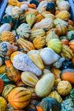 Abóboras diminutas coloridas para a venda em um remendo da abóbora de Dia das Bruxas Fotografia de Stock Royalty Free