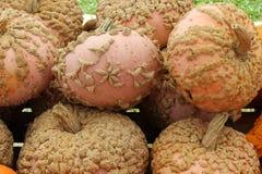Abóboras do amendoim Fotografia de Stock