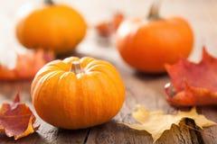 Abóboras do Dia das Bruxas do outono no fundo de madeira Fotografia de Stock Royalty Free