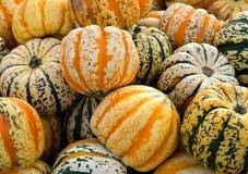 Abóboras do Gourd em uma pilha. imagens de stock royalty free