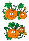 Abóboras dos desenhos animados que crescem em videiras Fotos de Stock Royalty Free