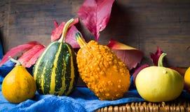 Abóboras e folhas coloridas do outono Fotografia de Stock
