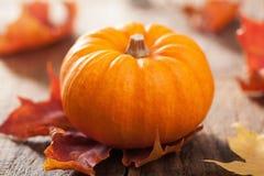 Abóboras e folhas de outono decorativas para o Dia das Bruxas Imagem de Stock