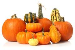 Abóboras e gourds foto de stock royalty free