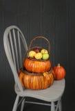 Abóboras e maçãs no tema da cesta, da queda ou da ação de graças Fotografia de Stock