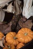 Abóboras e milho para a decoração da ação de graças Foto de Stock Royalty Free