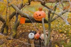 Abóboras e outros artigos da decoração para Dia das Bruxas Imagens de Stock