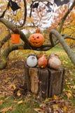 Abóboras e outros artigos da decoração para Dia das Bruxas Fotografia de Stock Royalty Free