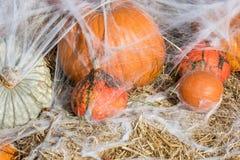 Abóboras e teias de aranha como uma decoração para Dia das Bruxas foto de stock