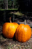 Abóboras em Halloween fotos de stock