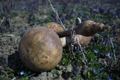 Abóboras em um campo de grama com fundo obscuro fotos de stock royalty free