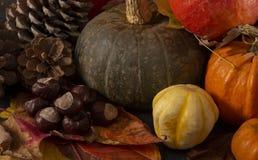 Abóboras, folhas e conkers coloridos múltiplos fotografia de stock