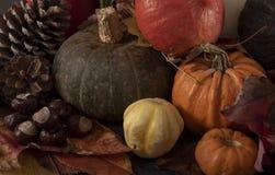 Abóboras, folhas e conkers coloridos múltiplos imagens de stock royalty free