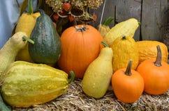 Abóboras, Gourds e polpa fotos de stock