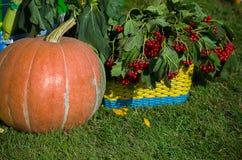 Abóboras listradas alaranjadas maduras em uma cesta imagem de stock