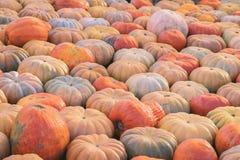 Abóboras maduras naturais orgânicas Símbolo da colheita, ação de graças, Dia das Bruxas Fundo rústico Imagem de Stock