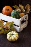 Abóboras minúsculas na caixa de madeira na tabela Imagens de Stock