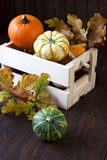 Abóboras minúsculas na caixa de madeira na tabela Foto de Stock Royalty Free