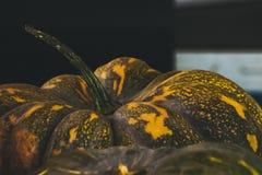 Abóboras no fundo preto fotografia de stock royalty free