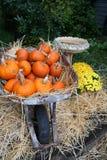 Abóboras no Wheelbarrow Fotografia de Stock