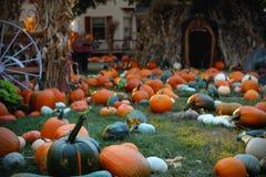 Abóboras para a venda Exploração agrícola e celeiros americanos no outono em Illinois Imagem de Stock