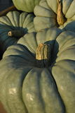 Abóboras verdes Fotos de Stock Royalty Free