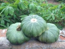 Abóboras verdes dos produtos orgânicos Imagens de Stock Royalty Free