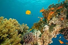 ab autour du sha de corail de mahmud de poissons Photographie stock libre de droits