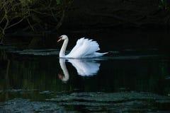 ?ab?d? w jeziorze zdjęcia royalty free