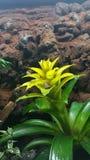 Żaba żółty kwiat Obraz Royalty Free