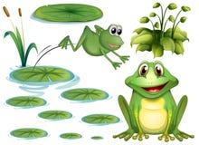 Żaba i liście ilustracji
