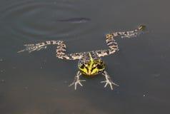 Żaba i ryba Fotografia Stock