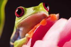 żaba lear Zdjęcia Stock