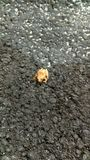 żaba malutka Zdjęcia Stock