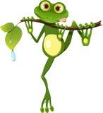Żaba na gałąź ilustracji