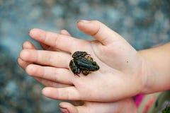 Żaba na palmach Zdjęcie Royalty Free