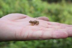 Żaba na ręce zdjęcia stock