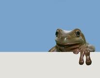 żaba plakat Zdjęcia Stock