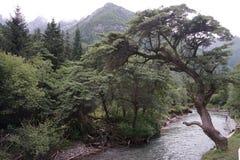 Aba-prefektur i det sichuan landskapet, berg för fyra flickor Royaltyfri Bild