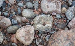 Żaba przy skałą Obraz Royalty Free