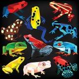 Żaba set ilustracji