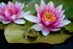 Żaba siedzi na ochraniaczu wśród kwiatów lilly fotografia stock